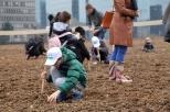 Agnes-Denes-Wheatfield-courtesy-Fondazione-Riccardo-Catella-Milano-04