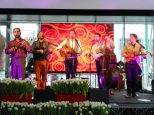 Tamburocket – Concerto del gruppo musicale Söndörgő Band