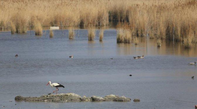 """Pannonian Bird Experience"": Birdwatching in Ungheria per osservare gli uccelli migratori"