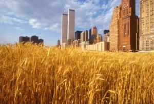 wheatfield-financialcenter