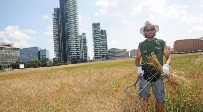 """""""Wheatfield"""": Festa del raccolto al campo di grano dell'artista ungherese-americana Ágnes Dénes"""